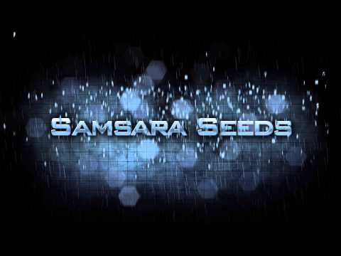 Samsara seeds - High grade cannabis seeds