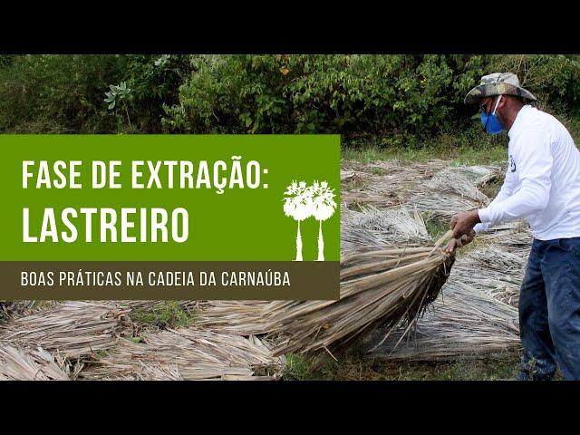 Lastreiro - Boas Práticas na Cadeia Produtiva da Carnaúba
