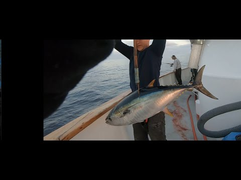 Awesome Bluefin/Yellowfin Tuna Fishing Part I Of II Fall 2019 San Diego Multiday