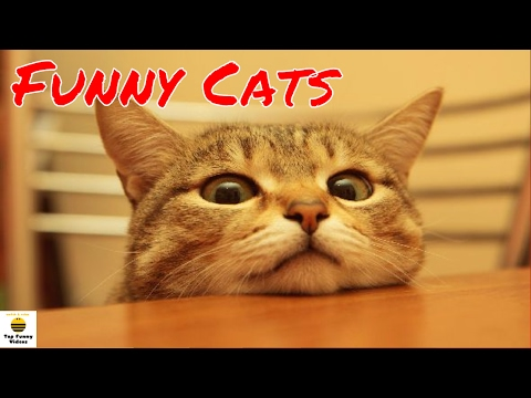 Funny Cats Compilation 2017 🐱😹 [P2] - Best Funny Cat Videos   💗 Funny Cats 2017 by TFVs 💝
