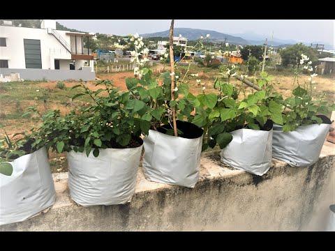 Terrace gardening for