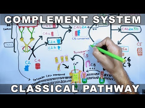 Complement System |  Classical Pathway