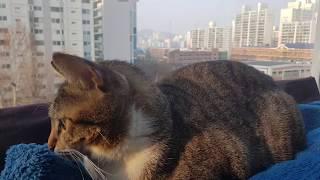 고양이캐노피 캣티오 설치~