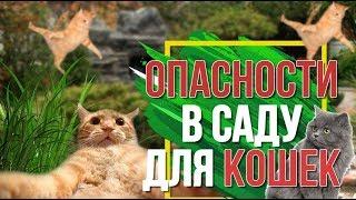 ВАШ САД МОЖЕТ БЫТЬ ОПАСНЫМ ✔️ Вредные Растения для Вашей Кошки ✔️ Советы от Garden zoo