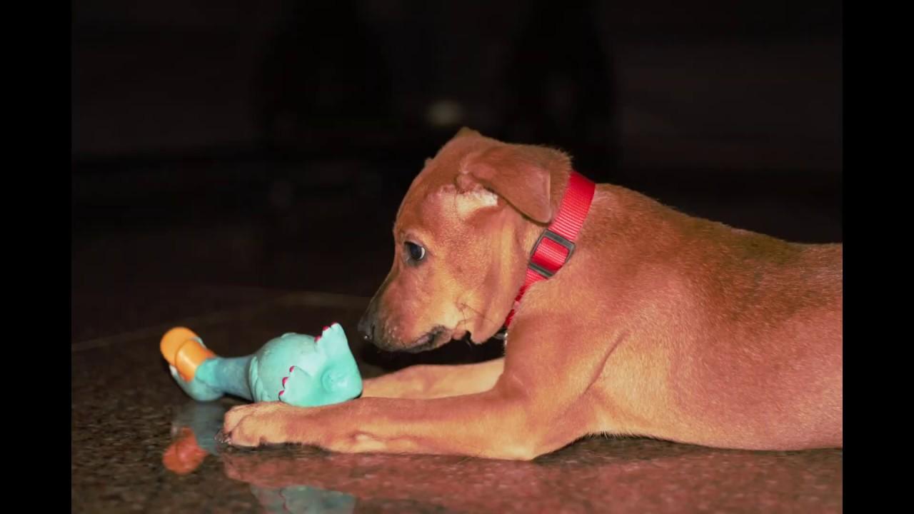 pariah dogs | animals | dog | funnyanimals