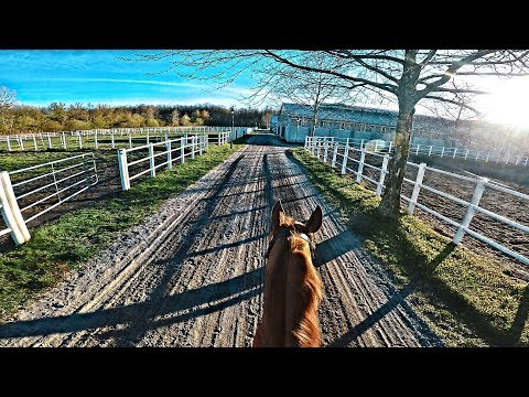 STUNNING 70 Km/H Fast Gallop Training Procedure Routine | Pretorian | GoPro