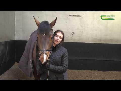Student Video - Equine