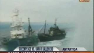 Barco de Greenpeace chocó a pesquero japonés