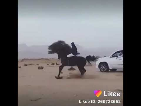 Beautifull Mushka In Action