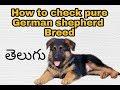 How to check German shepherd pure breed in Telugu   know pure breed dog   Taju logics