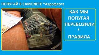 Как перевозить попугая в самолете см.описание. Аэрофлот разрешает перевозить птиц.