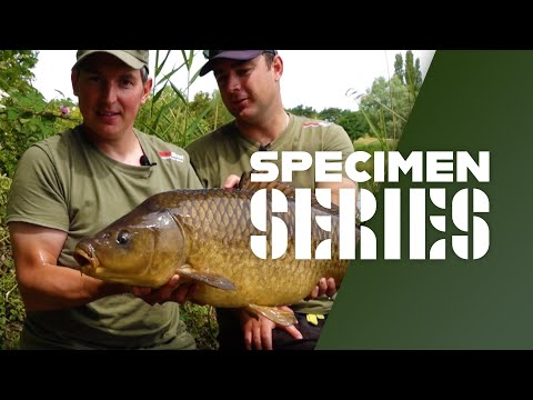 Surface Fishing For Carp - Floater Fishing Rigs, Tips & Tactics