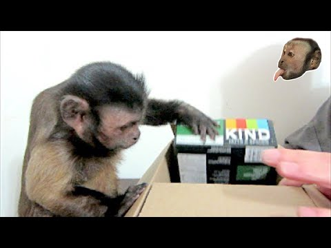 Capuchin Monkey Kind Bar Box!