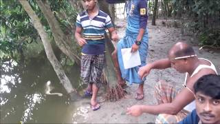 Amazing Fish Hunting in village