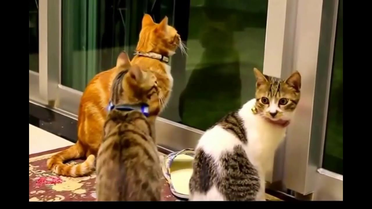 The Very Best Funny Animals Vedeos