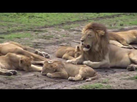 Tanzania Tourism- Mumbai to Tarangire National Park ( Africa Tourism )