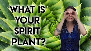 Spirit Plants (What is a Spirit Plant and How To Find Your Spirit Plant)