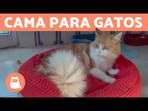 Cama Para Gatos De Expertoanimal Muy Fácil De Hacer Youtube