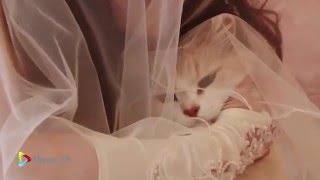 СВАДЬБА Загадочная #свадьба 2013 - 2017 ч.1