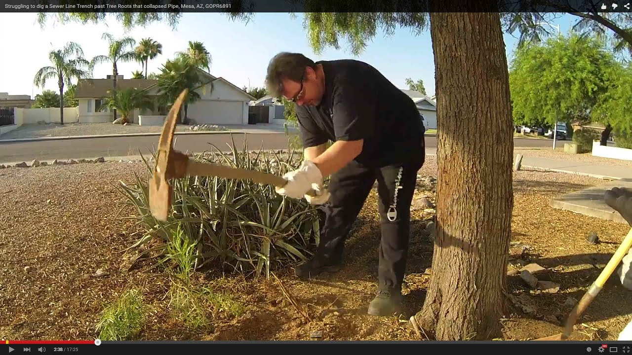 Struggling to dig a Sewer Line Trench past Tree Roots that collapsed Pipe,  Mesa, AZ, GOPR6891
