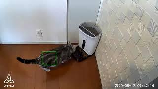 スマートホームカメラ「ATOM Cam」の犬猫検知機能
