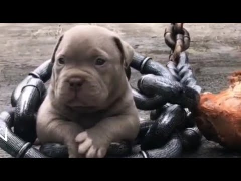 laugh-at-most-crazy-&-funny-animals-moments😂funny-and-cute-puppies-compilation