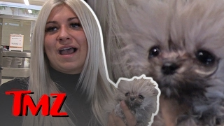 Kelly Osbourne's Pomeranian Gets A Personal Delivery