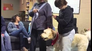 Therapy Dog Otis Visits Seaspar Eagles