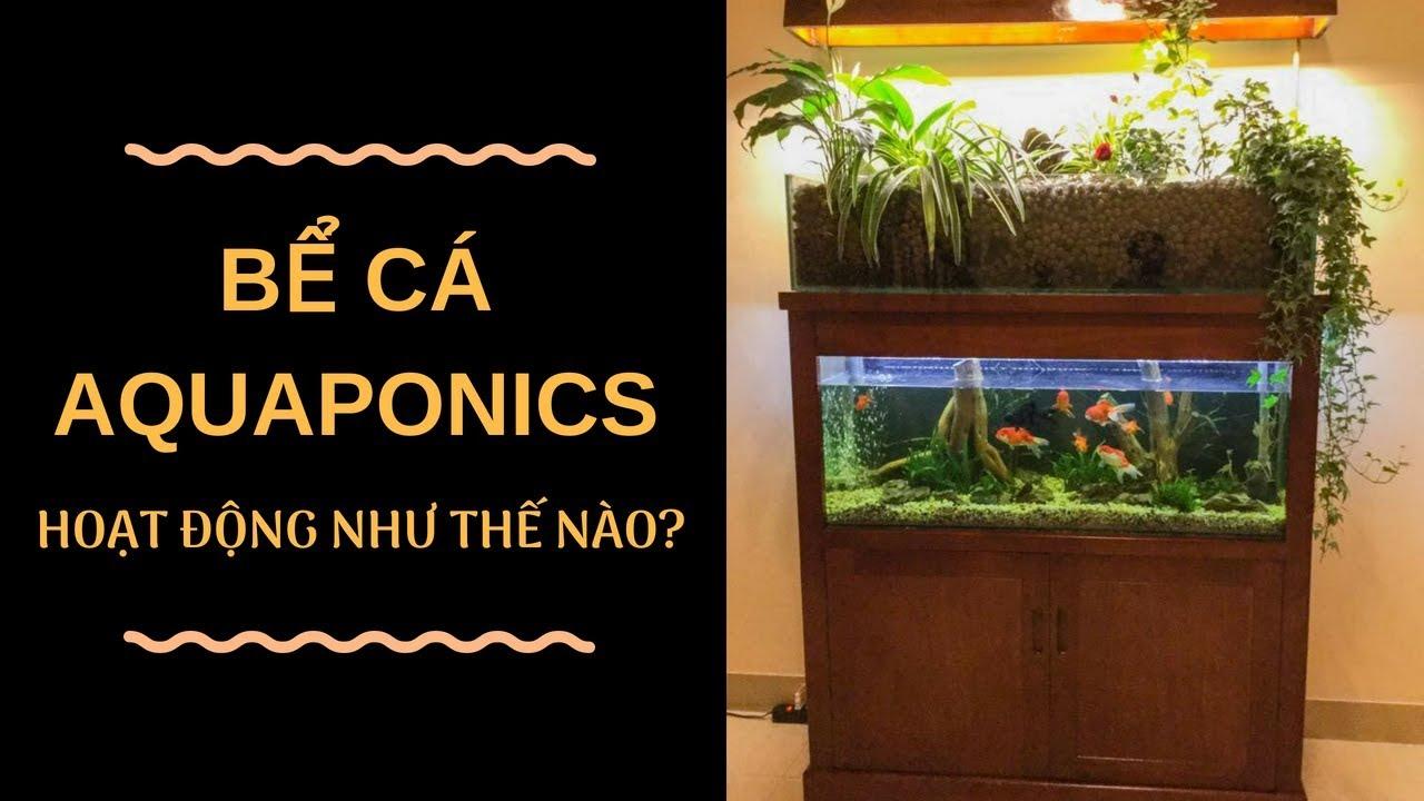 Bể cá cảnh đẹp ứng dụng công nghệ Aquaponics