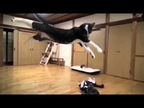 Прикольные кошки Топовые самые лучшие хиты Забавно смотреть!!из YouTube · С высокой четкостью · Длительность: 4 мин24 с  · Просмотры: более 19.000 · отправлено: 28.12.2013 · кем отправлено: Кошачьи Приколы