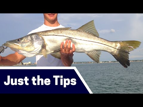 Wintertime Snook Fishing Tips: Where, Bait, And Tackle [Just The Tips]
