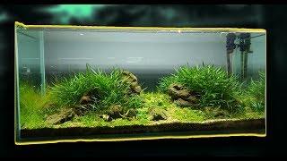 Обзор моих аквариумов, Апрель 2019! My plants aquariums!