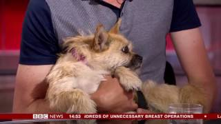 BBC Finding Gobi with Annita McVeigh