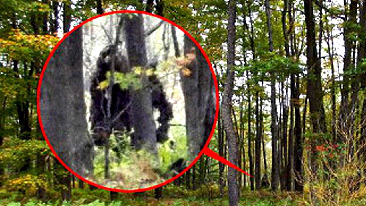 Is Bigfoot Real? - YouTube