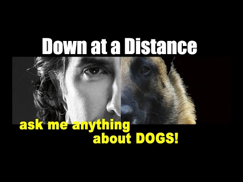 Down at a Distance - Dog Training - ask me anything