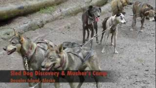 Sled Dog Discovery & Musher's Camp.mov