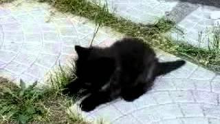 Прикольные котята и псих