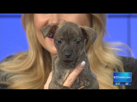 Maricopa County Animal Care and Control is offering free adoptions for dogs over 20 pounds