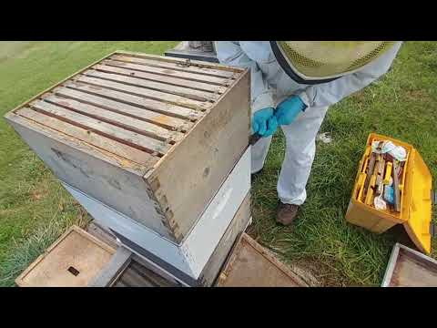 Bees for White Clay Nebraska https://www.gofundme.com/4akaiow