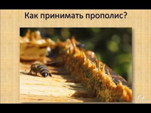Начинающему пчеловоду
