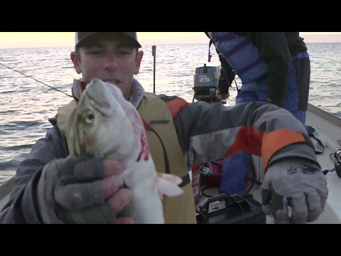 Fishing Connecticut Stripers!!! (Going Ike S2 - Ep. #7)