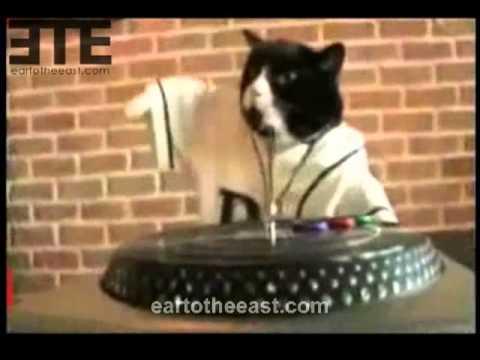 Cat Dj Ny Hip Hop Cat Youtube