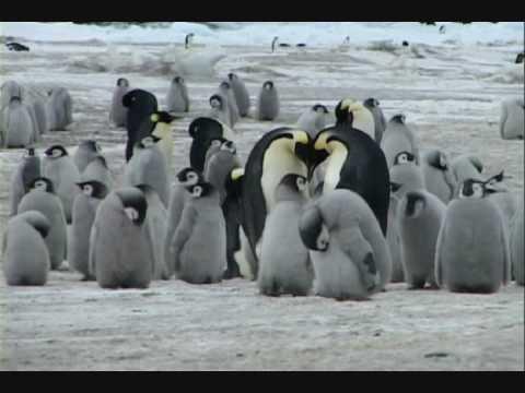 Planet Penguin - Icerain on the Antarctic Peninsula