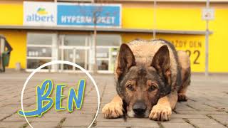 Ben the German Shepherd  9 years | Dog tricks