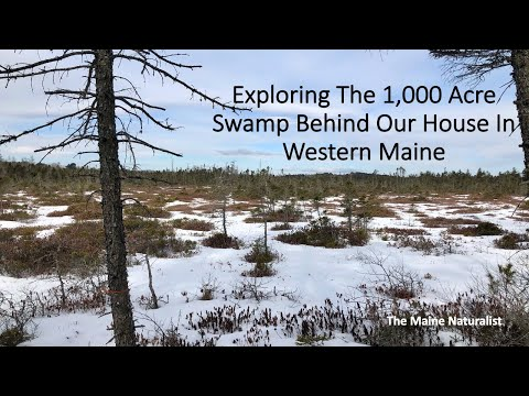 Exploring The 1,000 Acre Swamp Behind Our House In Western Maine