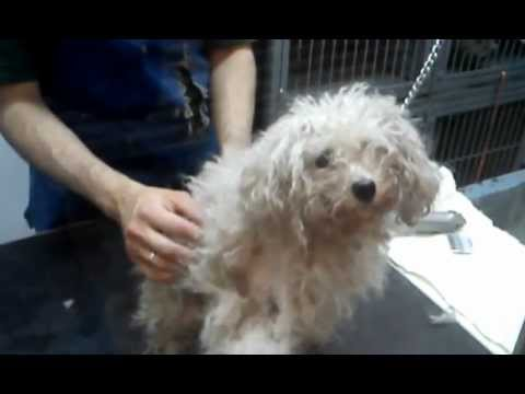 Estetica SPA CeBiVe Animal Friends Servicio Intensivo Perros ...