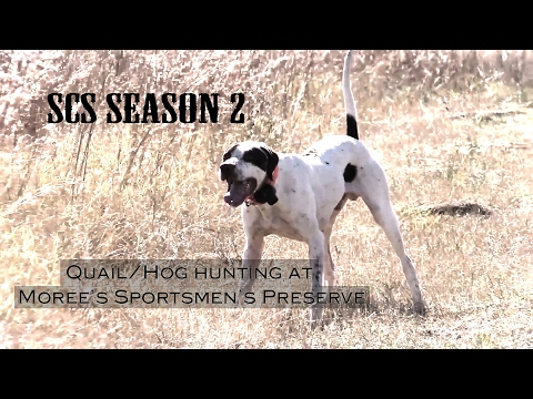 SCSTV S02E10 Quail And Hog Hunting At Moree's Preserve
