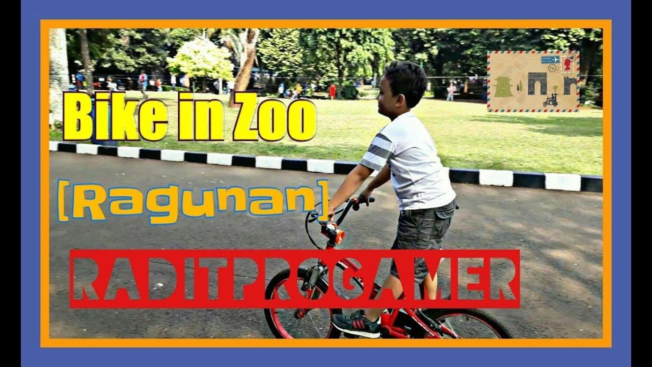 Bike in zoo (bersepeda di kebun binatang) Ragunan - YouTube