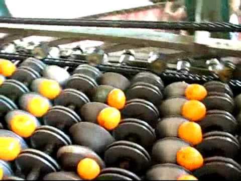 Сушилка для абрикос своими руками