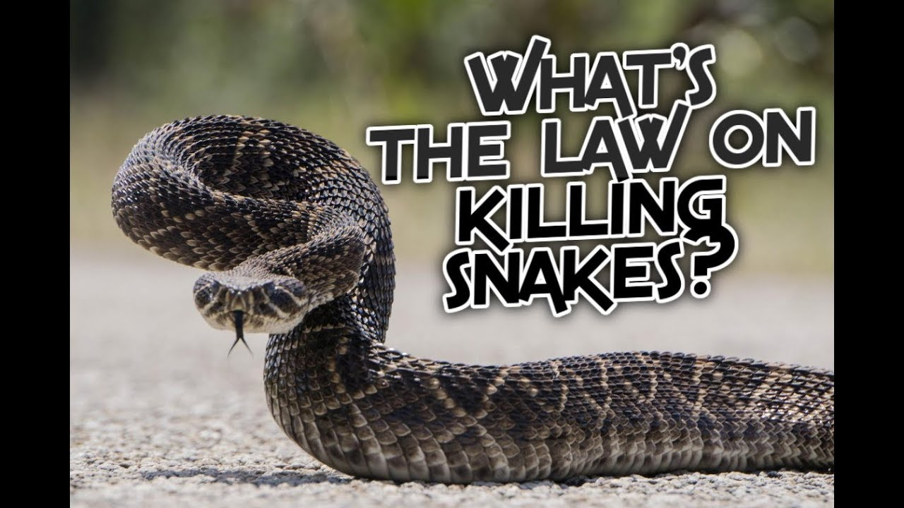 What is the Law on Killing Snakes by State? — Snakes for Pets